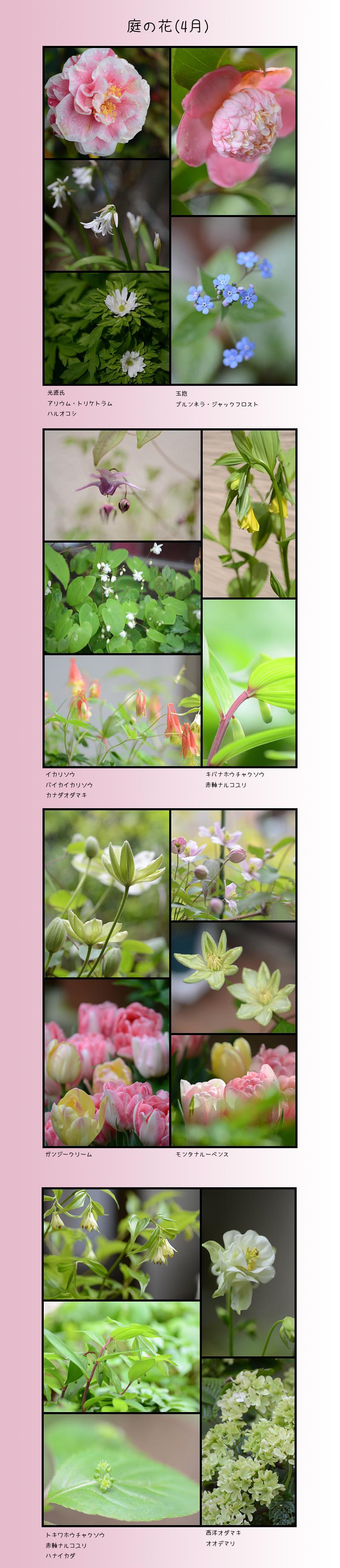 4月29日庭の花1