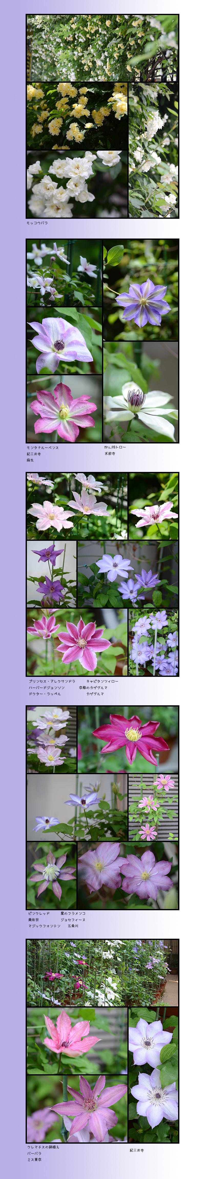 4月29日庭の花2
