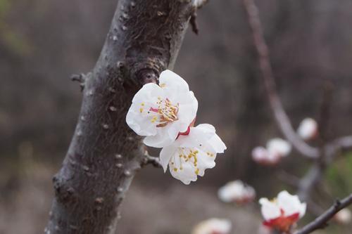 2014-4-20-1_20150420225832b0d.jpg