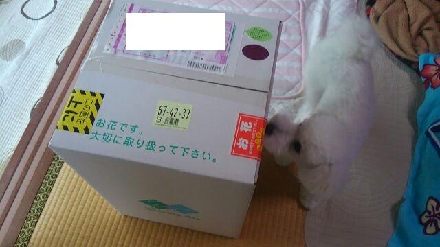15茶実61610