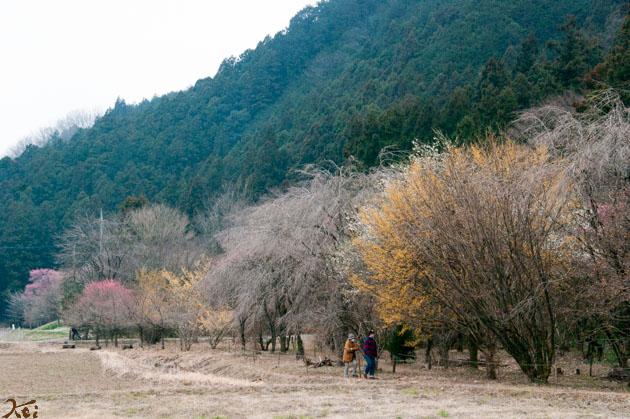 20150315四季の森17