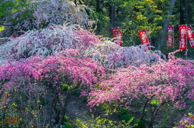 201040426龍願寺12