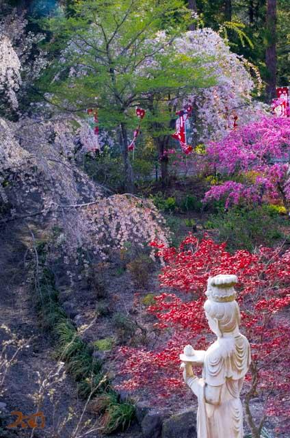201040426龍願寺08