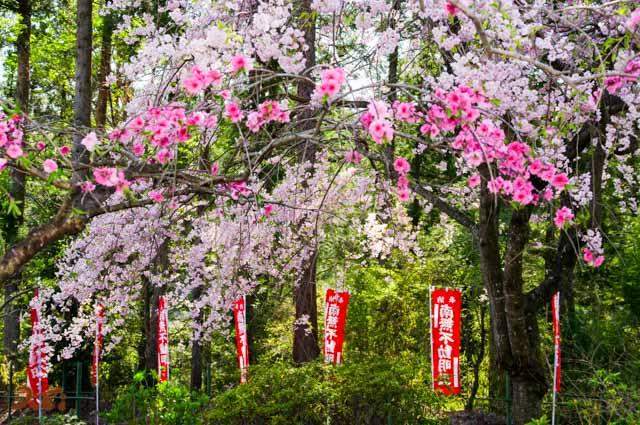 201040426龍願寺05