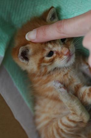 liffycat1