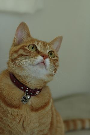 liffycat2