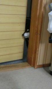自動ドア 1
