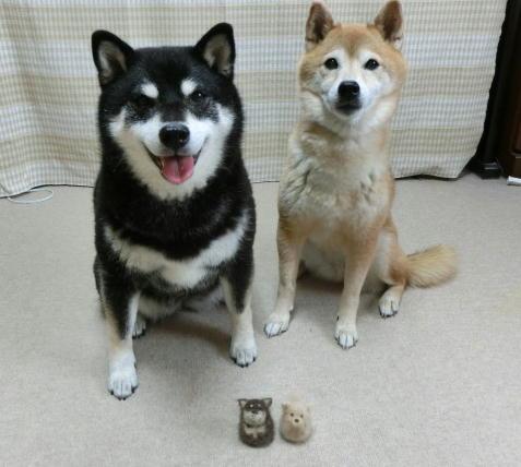 犬毛 卵型コロクロ