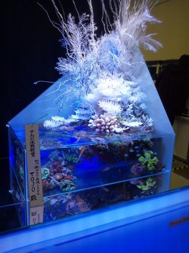 日本観賞魚F