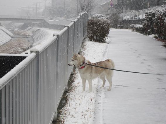 150130 雪09
