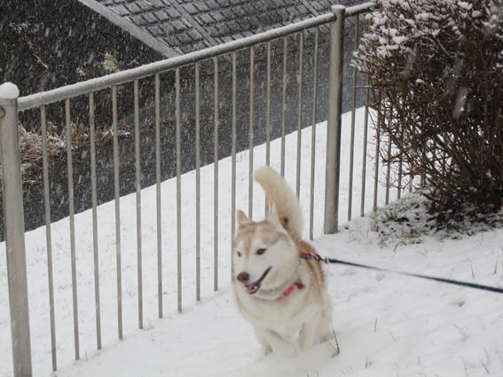 150130 雪06