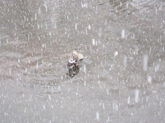 150130 雪08