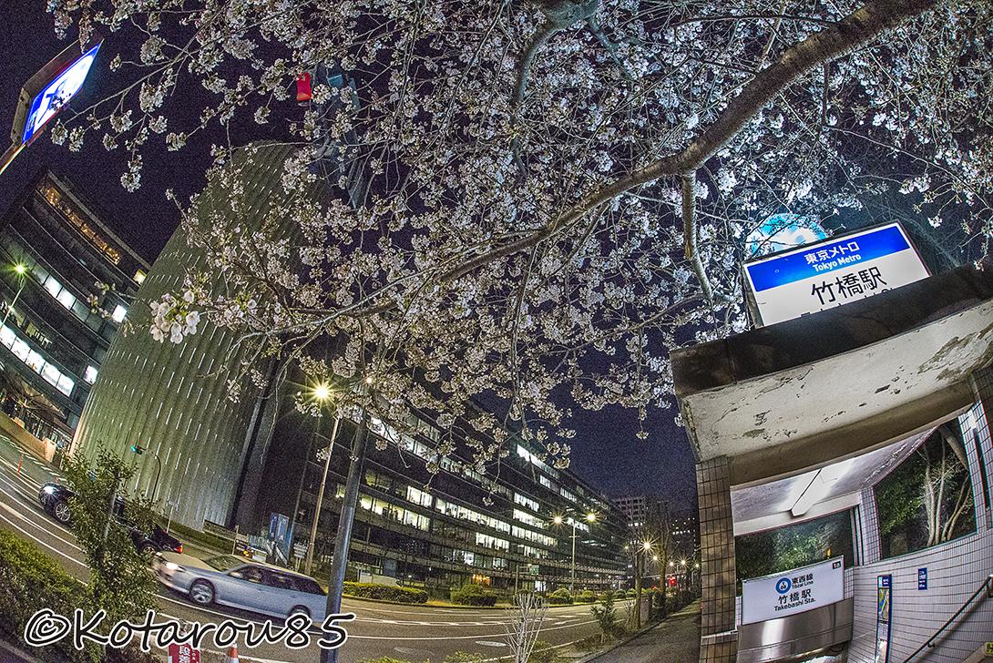 竹橋のサクラ 20150329