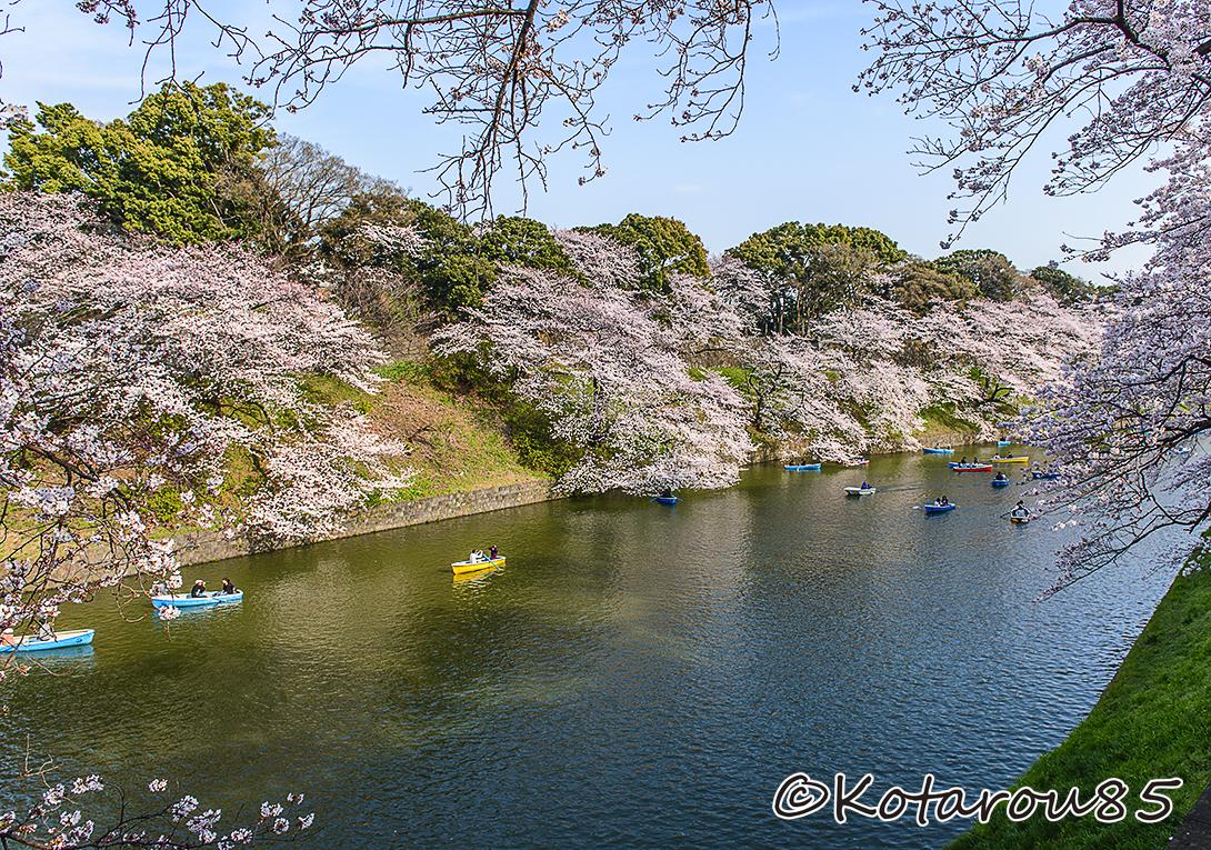 千鳥ヶ淵の桜 その2 1 20150331