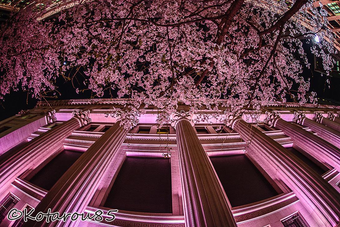 日本橋三井本館 桜色ライトアップ 20150331
