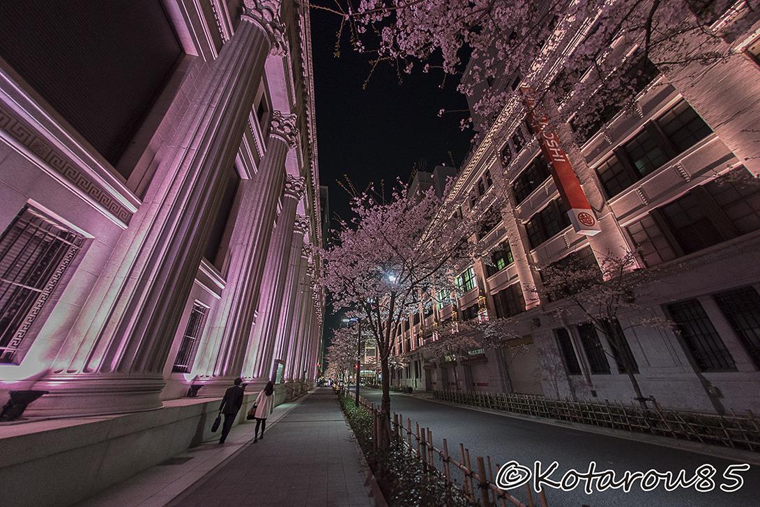 日本橋蜜本館 桜色ライトアップ(2) 20150331