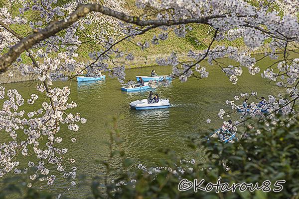 千鳥ヶ淵 ボート 20150401