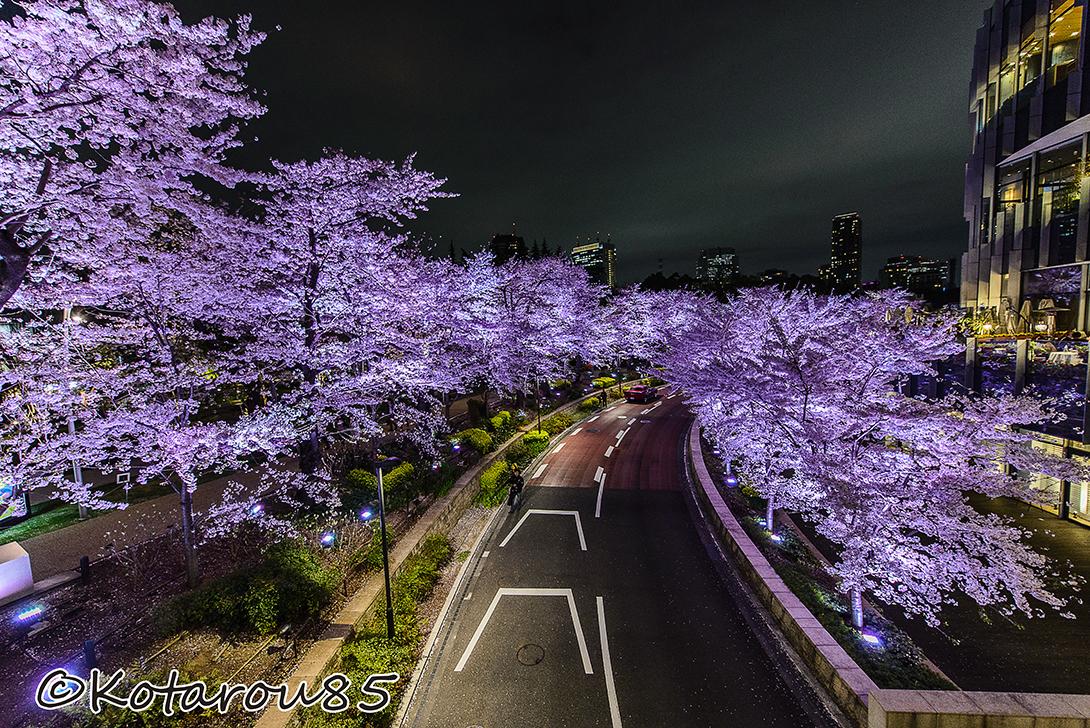 六本木の桜ライトアップ 20150403