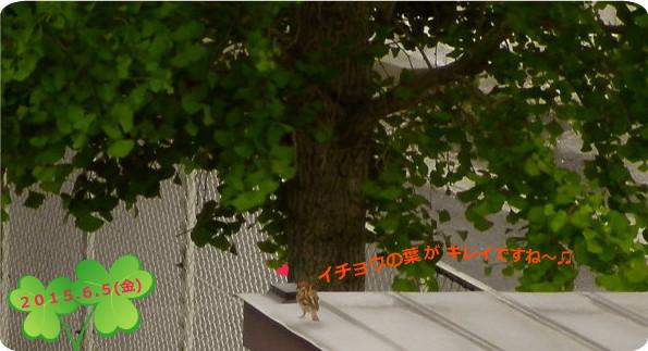 花ブ20150606-2