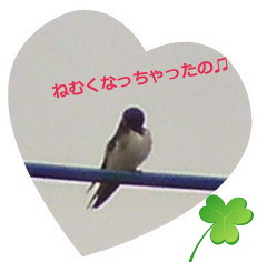 花ブ20150615-2