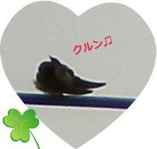 花ブ20150615-5