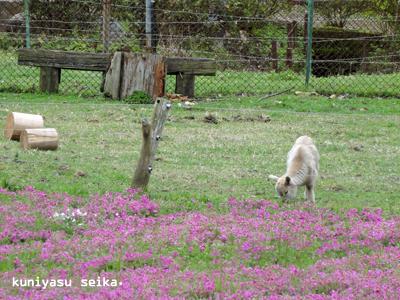 山本牧場3