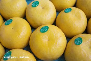 【贈答用】 愛媛産 ・ ナダオレンジ