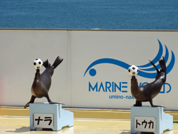 海の中道海浜公園3-1