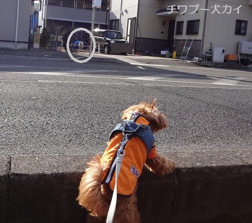 ルンルン散歩 (4)