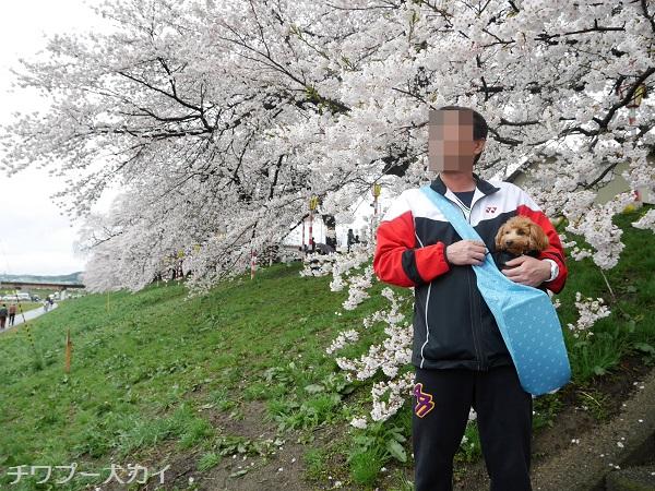 大河原 桜まつり (4)