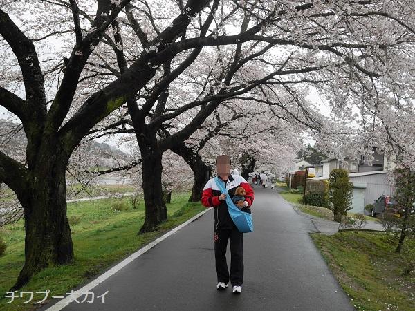 大河原 桜まつり (7)