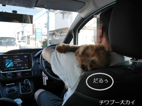 運転席LOVE (1)