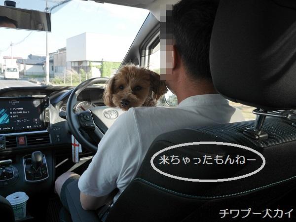運転席LOVE (2)