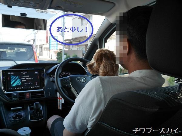運転席LOVE (4)