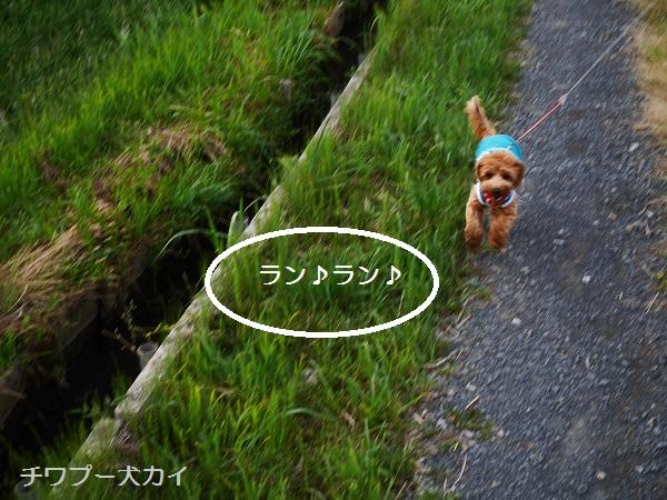 パパと田んぼ散歩はたのしいよ (2)