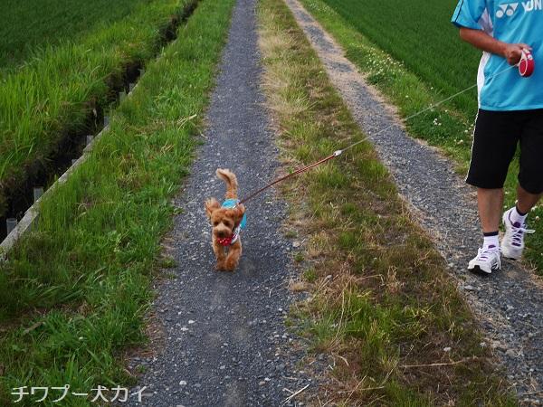 パパと田んぼ散歩はたのしいよ (3)