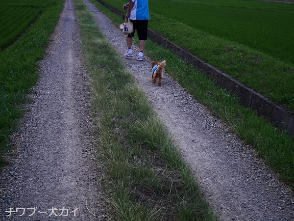 パパと田んぼ散歩はたのしいよ (9)