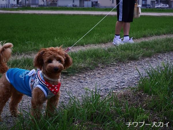 パパと田んぼ散歩はたのしいよ (11)