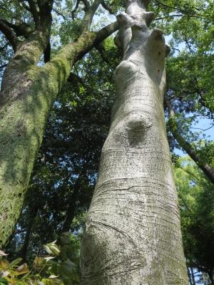 縮景園の樹