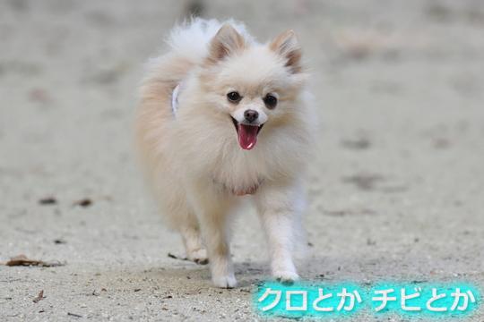 540px20150809_MiTo-04.jpg