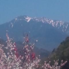 花桃と木曽駒ヶ岳