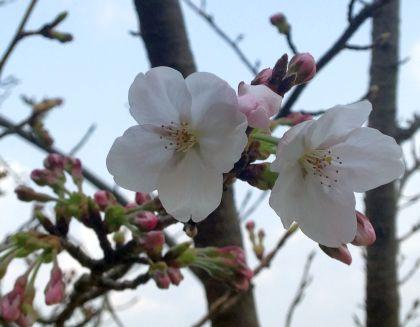 322_6開花