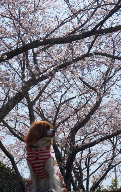 331_2縦ペロ