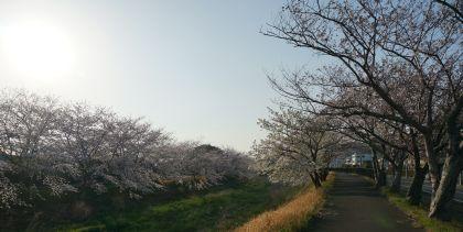 331_8川沿2