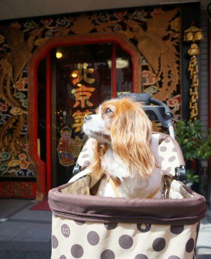 408_5北京菜館
