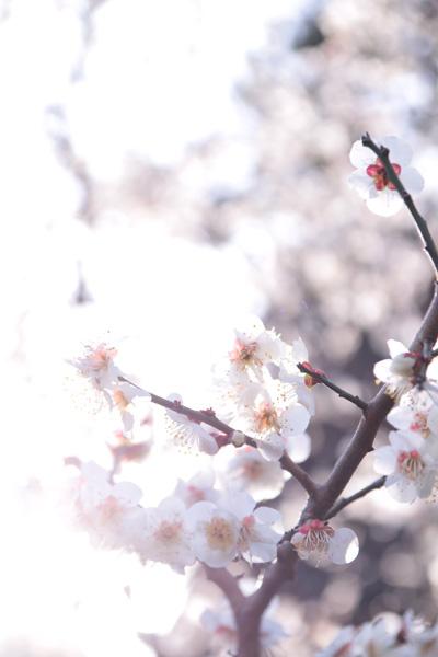 photo828.jpg