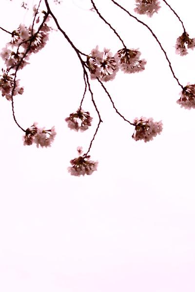 photo844.jpg