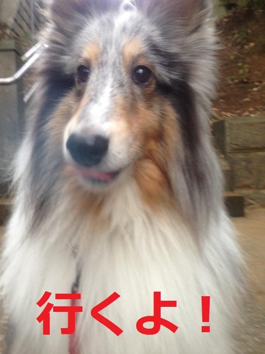青木神社0