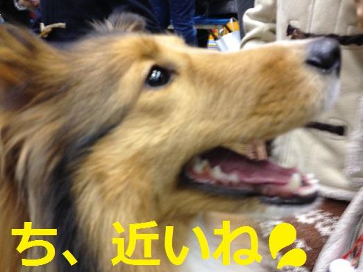 東京ビッグサイト93こむぎさん