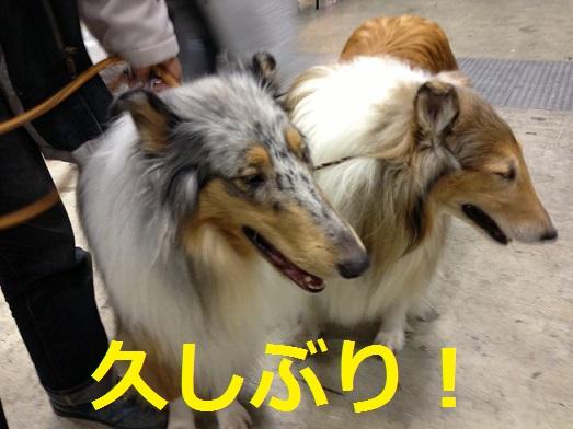 東京ビッグサイト7